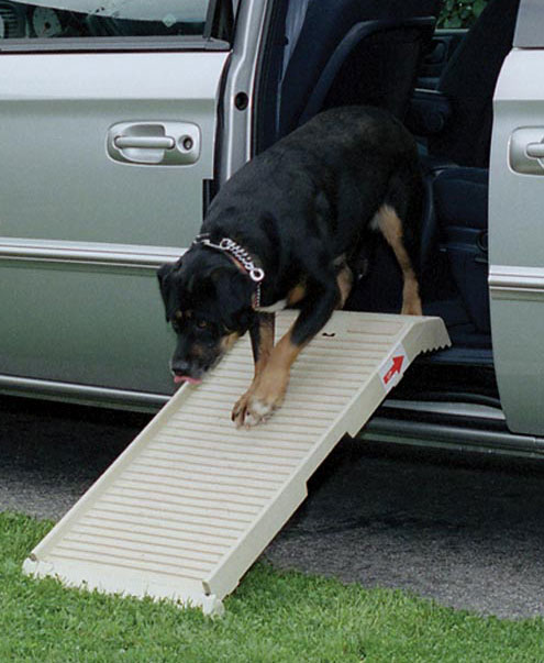 dog coming down petstep ramp